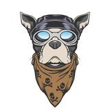 Fototapety Dog biker illustration