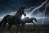 Running black horses