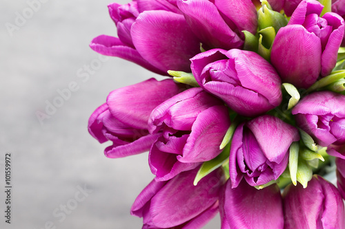 Fototapety, obrazy : Purple tulip bouquet on the gray background.