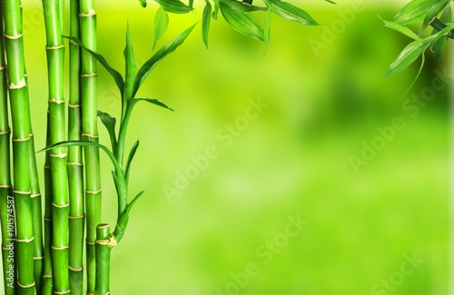 Bamboo. Poster