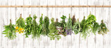 Medicinal herbs. Herbal apothecary. Lavender, dandelion, nettle - 101578171