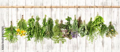 Obraz na Plexi Medicinal herbs. Herbal apothecary. Lavender, dandelion, nettle