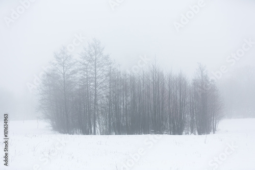 The trees in winter - 101634963