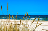 Sea and sandy beach view through grass from dunes, empty beach. - 101641356