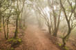 Obrazy na płótnie, fototapety, zdjęcia, fotoobrazy drukowane : Misty forest in Anaga mountains, Tenerife, Canary island, Spain.