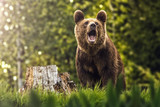 Big brown bear in nature or in forest, wildlife, meeting with bear, animal in nature
