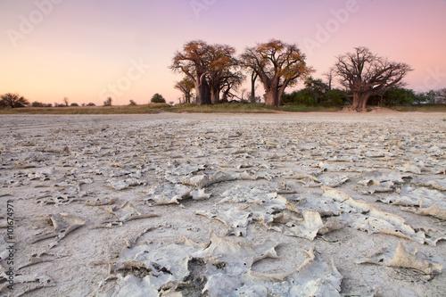 Staande foto Baobab Baines Baobabs
