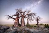 Baobab on Kubu island