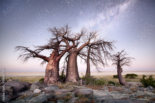 Foto op Aluminium Baobab Baobab on Kubu island
