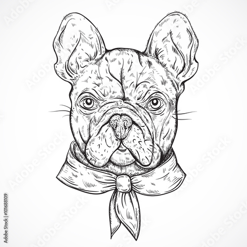 French Bulldog. Vintage black and white hand drawn vector illustration in sketch style - 101688109