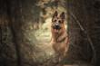 Obrazy na płótnie, fototapety, zdjęcia, fotoobrazy drukowane : In the forest