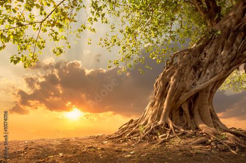 Naklejka Beautiful tree at sunset vibrant orange with free copy space.