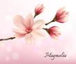 Obrazy na płótnie, fototapety, zdjęcia, fotoobrazy drukowane : Branch with two pink magnolia flowers. Vector.