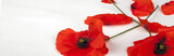 Poppies - for Remembrance Day - Isolated on White - Panorama background texture.