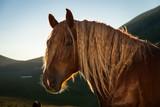Ritratto della testa di un cavallo marrone in controluce.