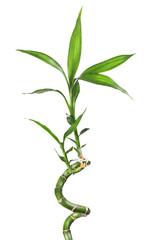 Bamboo isolated  white © Buriy