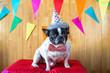 Obrazy na płótnie, fototapety, zdjęcia, fotoobrazy drukowane : Dog dressed for party