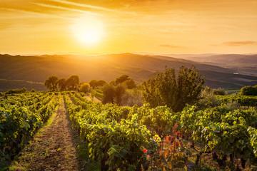 Vineyard landscape in Tuscany, Italy. Wine farm at sunset
