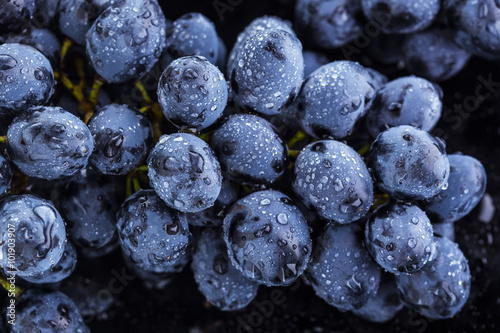 Plakat Ripe bunch of  blue grapes closeup with shining water drops