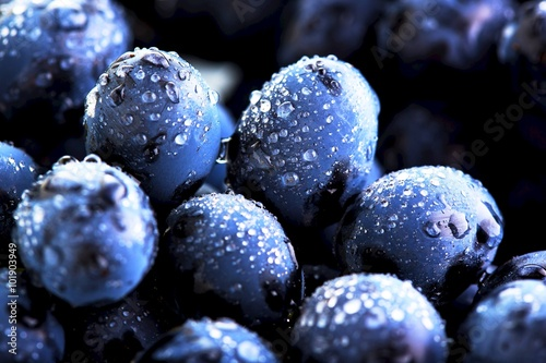Ripe bunch of  blue grapes closeup with shining water drops
