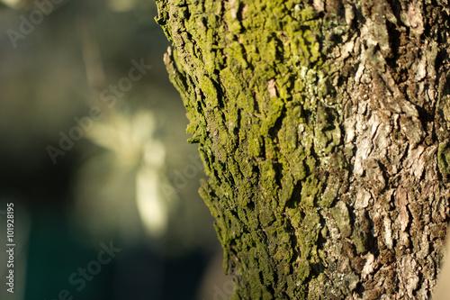 Poster albero, corteccia, tronco, legno