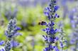 Obrazy na płótnie, fototapety, zdjęcia, fotoobrazy drukowane : bee and flower