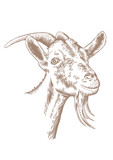 Goat head with horns - 101966119