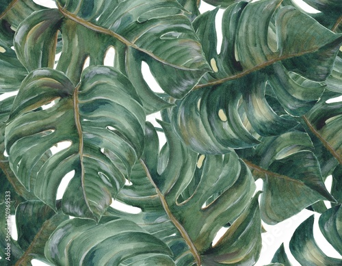 Seamless pattern with tropical Split Leaves Philodendron plant botanic watercolor painting on white background - 101969533