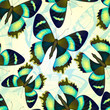 Seamless pattern with bright butterflies. Vector illustration, EPS 10