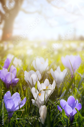 art Happy Easter day;  Spring flowers on sunny field