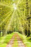 Szpaler drzew, ścieżka i wiosenne słońce