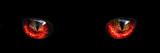 red monster night eyes closeup - 102017168