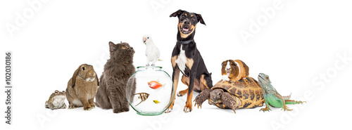 Large Group of Pet Animals Together