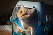 Pretty cat inside pet carrier