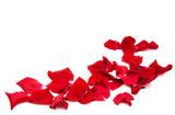 Red roses petals - 102048952
