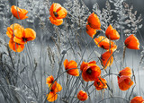 Fototapeta Krajobraz - Maki polne © Mike Mareen