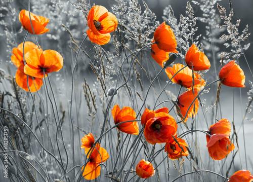 do-pokoju-z-kwiatami-makow