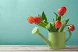 Spring tulip flower bouquet in watering can with copy space. Gardening concept