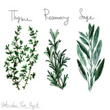Watercolor Food Clipart - Herbs - 102069961