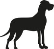 Great dane black silhouette