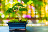 Close up shot bonsai on bokeh background