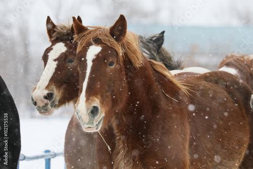 冬の牧場 © makieni