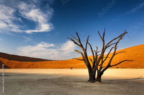 obraz PCV Dead tree in Sossusvlei, in the Namib Desert, Namibia
