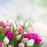 Fototapety bouquet of  pink, purple and white  tulips