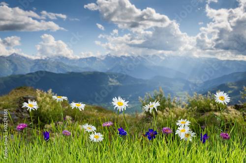 Panel Szklany Summer landscape