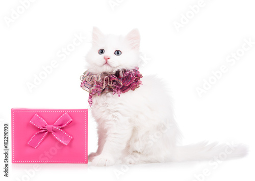 Poster, Tablou Cute fluffy kitten