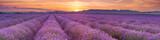 Fototapeta Lawenda - Sunrise over fields of lavender in the Provence, France © sara_winter