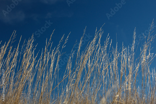 High grass on wind at blue sky - 102358507
