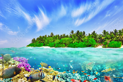 Plagát, Obraz Tropical island and the underwater world in the Maldives. Thoddo