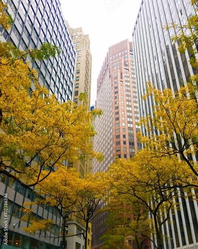 Fototapeta Financial district in autumn